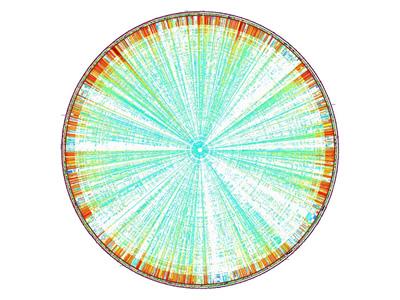 GenomeDiagram