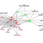 Network Visualizations